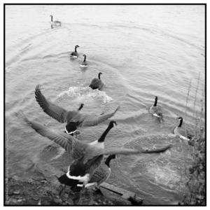 cours photo thierry navarro photographe melun